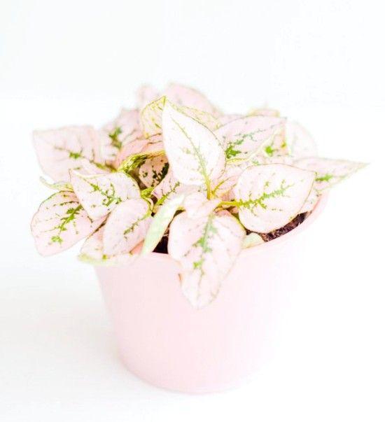 Квіти для дитячої кімнати: 10 фото варіантів